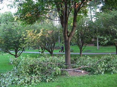 Cut back trees and shrubs