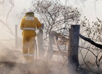 Tell us about bushfires in your area